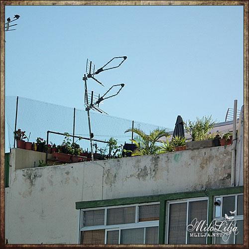 2012-01-27-Teneriffa2
