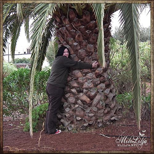 2012-01-28-teneriffa28