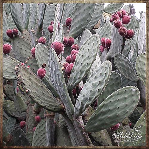 2012-01-28-teneriffa34