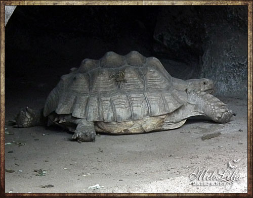 2012-01-29-teneriffa45