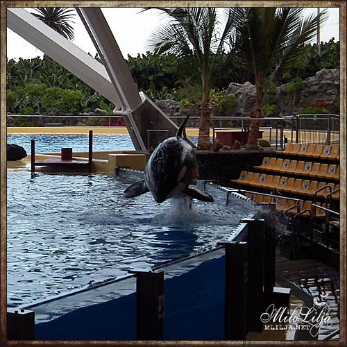2012-01-29-teneriffa54