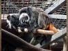 2012-01-29-teneriffa24